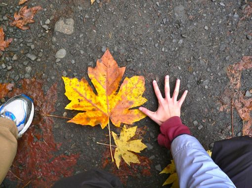 We Found Massive Leaves THREE Times The Size of My Hand! (Click for High-Quality Version)